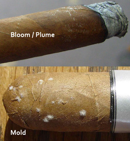 Plume and mold