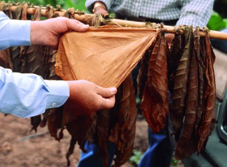The Definitive Cigar Wrapper Guide from A to Z